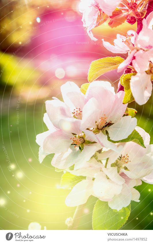 Colourful nature background with spring flowers Design Summer Garden Nature Plant Sunlight Spring Beautiful weather Leaf Blossom Park Blossoming Yellow Green