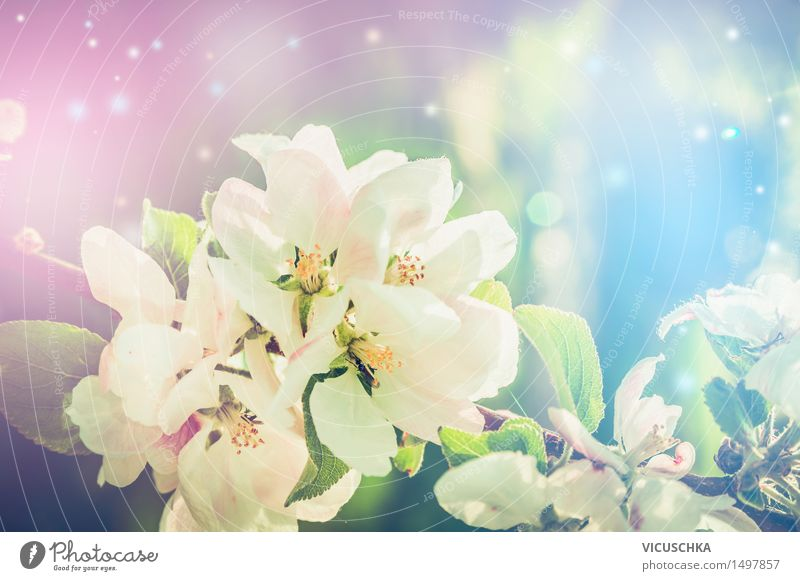 Beautiful nature background with spring blossom Lifestyle Design Summer Garden Nature Plant Sunlight Spring Beautiful weather Leaf Blossom Park Blossoming Pink