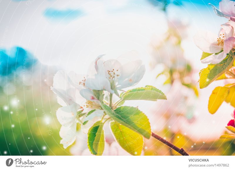 sunny spring tree blossom Design Summer Garden Nature Plant Sky Sunlight Spring Beautiful weather Leaf Blossom Park Blossoming Soft Pink Background picture