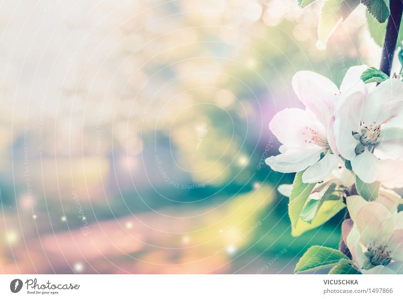Nature Plant Summer Tree Leaf Blossom Spring Background picture Garden Moody Pink Design Park Blossoming Beautiful weather Bud