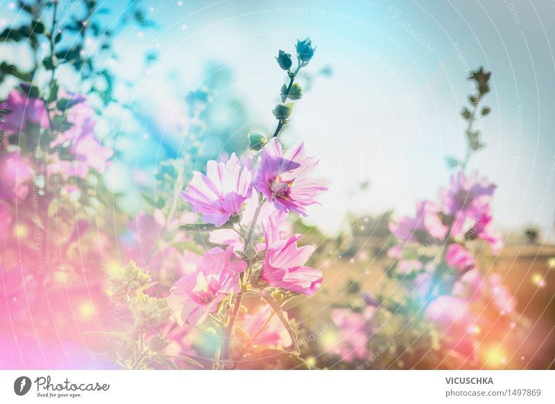 summer flowers nature background with flowering mallow Lifestyle Design Summer Garden Nature Plant Sky Beautiful weather Flower Grass Leaf Blossom Park