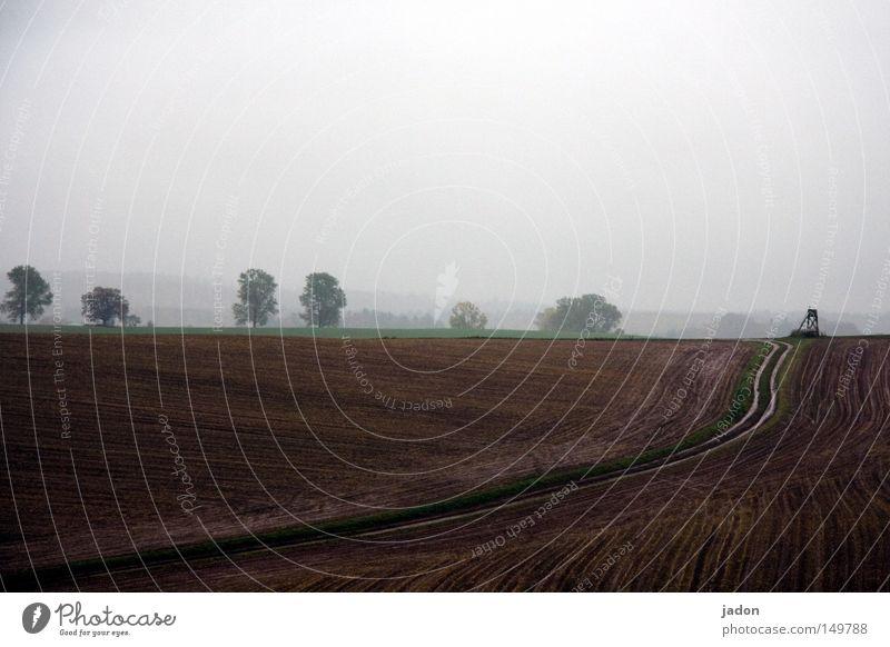 Sky Tree Autumn Dream Lanes & trails Rain Landscape Moody Field Fog Climate Tracks Idyll Hill Harvest Footpath