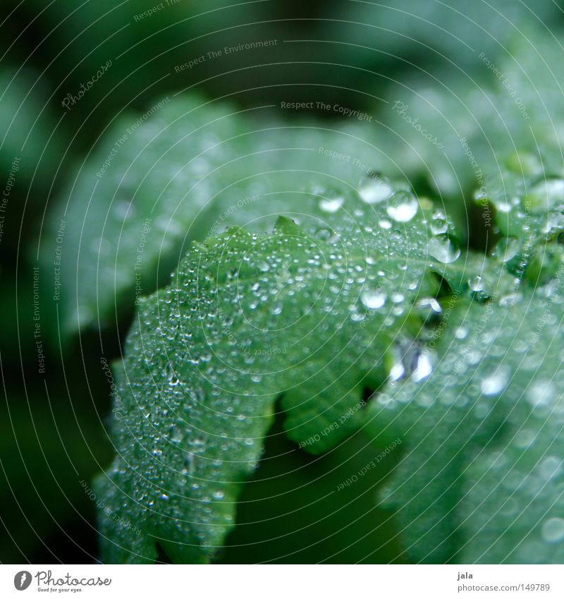 Plant Beautiful Water Leaf Life Autumn Rain Glittering Drops of water Wet Romance Drop Harmonious Thunder and lightning Damp Thirst