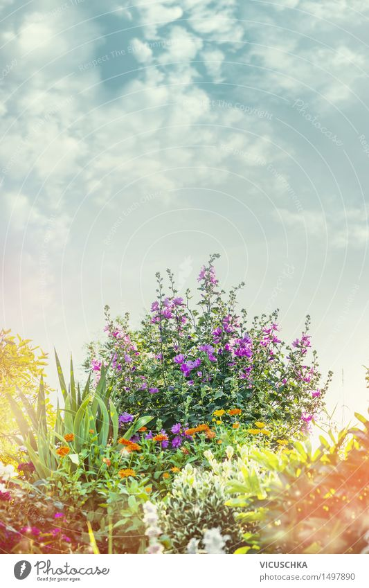 Summer Garden with flower bed Design Decoration Nature Plant Sky Sunlight Spring Autumn Beautiful weather Flower Grass Bushes Leaf Blossom Park Blossoming