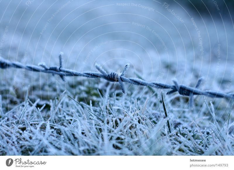 White Winter Snow Grass Fear Frost Wire Penitentiary Barbed wire Mountain meadow Pasture fence