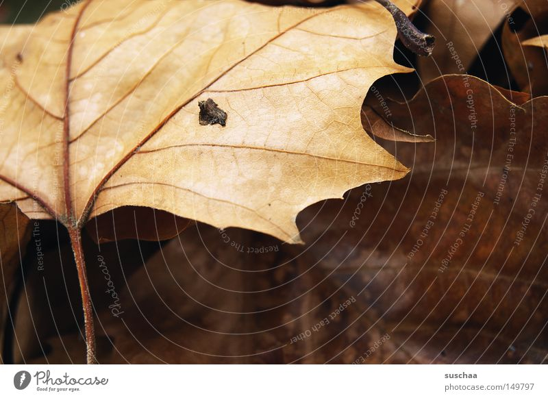 (ur)leaves Leaf Vessel Autumn Cold Wet Seasons Freeze Sleep Macro (Extreme close-up) Close-up Transience Fatigue To hibernate