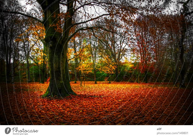 Nature Beautiful Tree Green Leaf Yellow Autumn Orange End Decline Seasons Forest HDR Vignetting