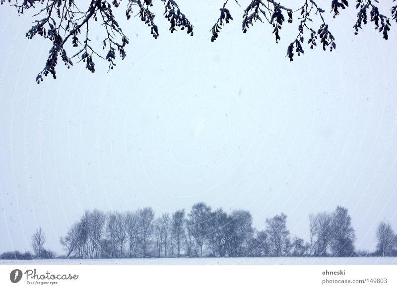 Sky Tree Winter Leaf Clouds Cold Snow Branch Twig Snowflake Flake