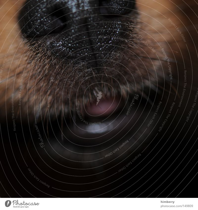 cold snout Snout Dog Animal Mouth Pet Odor Facial hair Beard hair Mammal Macro (Extreme close-up) Close-up Tongue sniffer dog Lips Nose