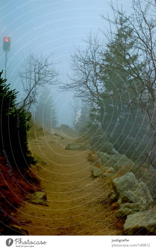 Nature Tree Winter Colour Forest Cold Autumn Mountain Stone Lanes & trails Hiking Fog Environment Sign Footpath Mystic