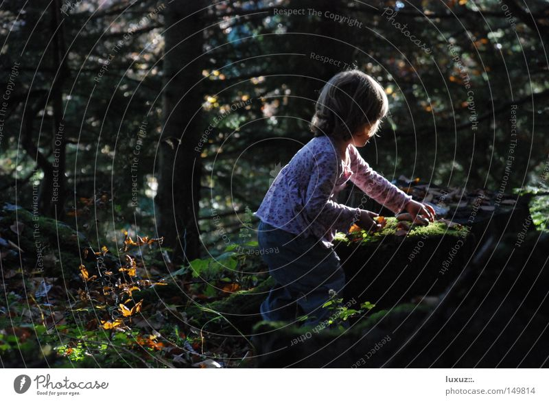 Child Nature Girl Forest Playing Kindergarten Education Curiosity Discover Mushroom Disc jockey Collection Mixture Parenting Development