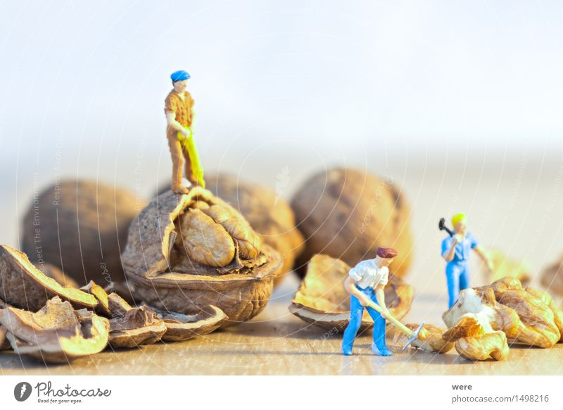 nutcrackers Food Work and employment Craftsperson Construction site Axe Nature Plant Eating Working man Construction worker Geography size ratio Woodcutter
