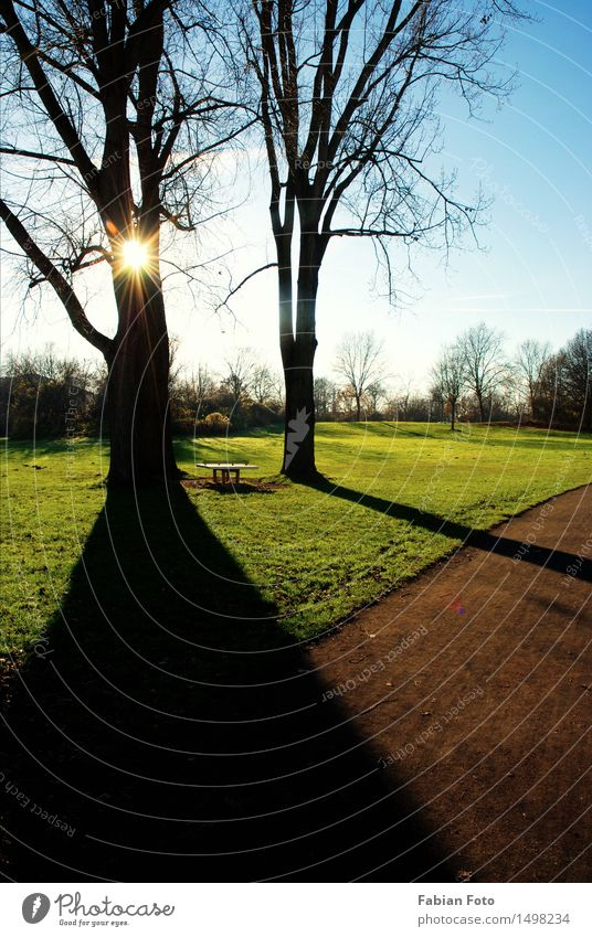 Nature Tree Sun Autumn Meadow Wood Dream Park Field Surprise Visual spectacle Point of light Shadow play Bright spot