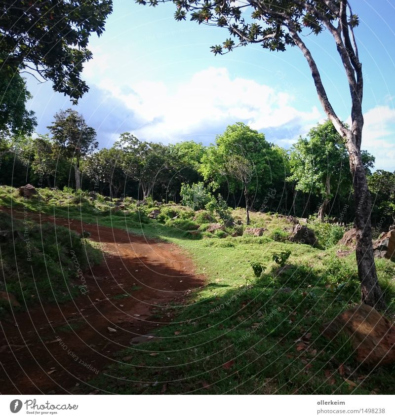 in the mountains of Mauritius Vacation & Travel Tourism Trip Adventure Far-off places Expedition Summer Summer vacation Mountain Hiking Buggy (Motorbike) Nature
