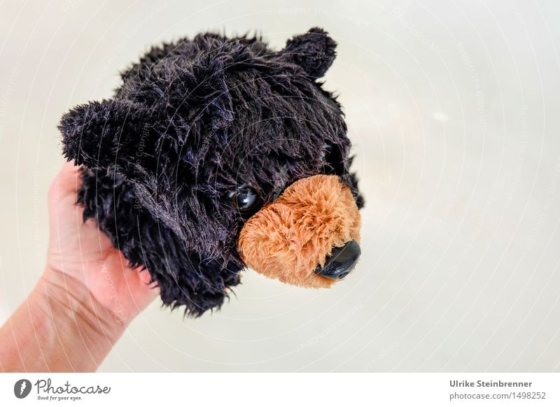 raccoon Pet Bear Grizzly 1 Animal Swimming & Bathing Hang Looking Cuddly Wet Soft Cleanliness Cuddly toy Toys black bear Plush Snout Glass eye Take a shower