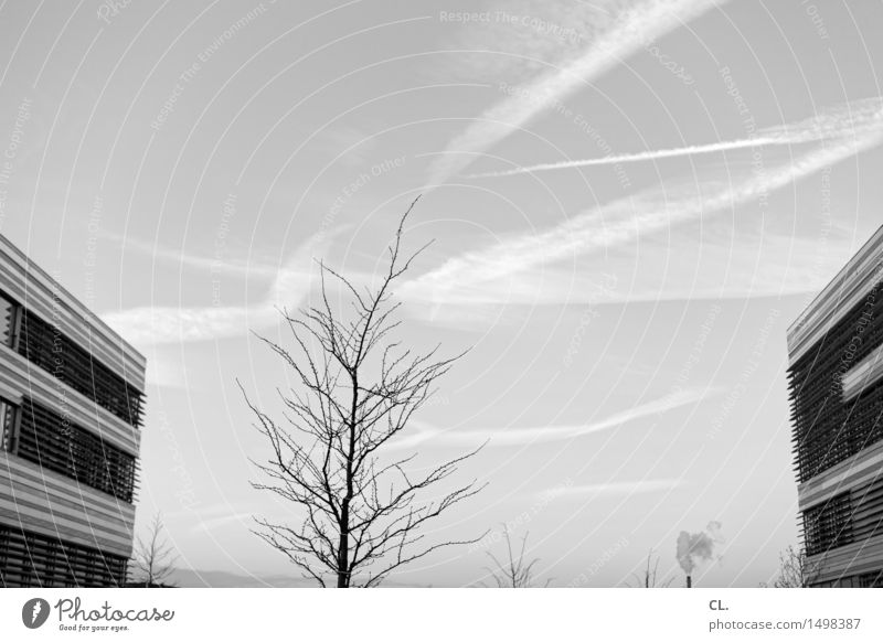 FH Environment Nature Sky Clouds Autumn Winter Weather Beautiful weather Tree Duesseldorf High-rise Building Architecture Facade Chimney