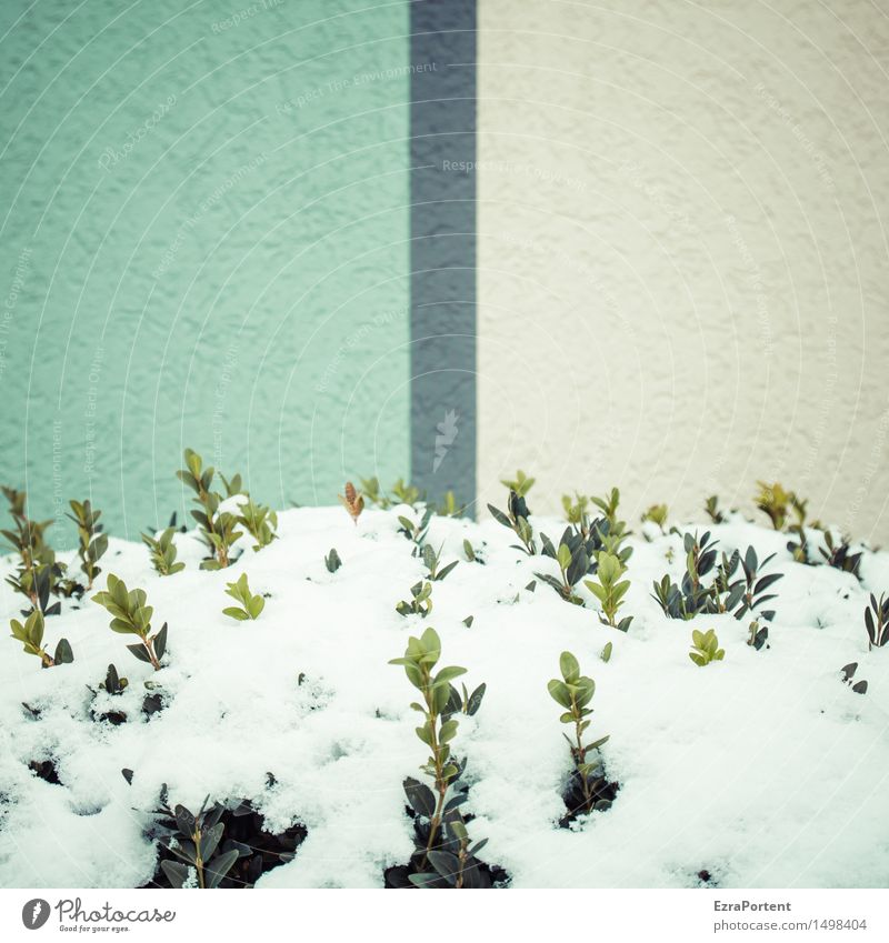 Plant Green Colour White Leaf House (Residential Structure) Winter Cold Wall (building) Architecture Snow Building Wall (barrier) Gray Line Facade