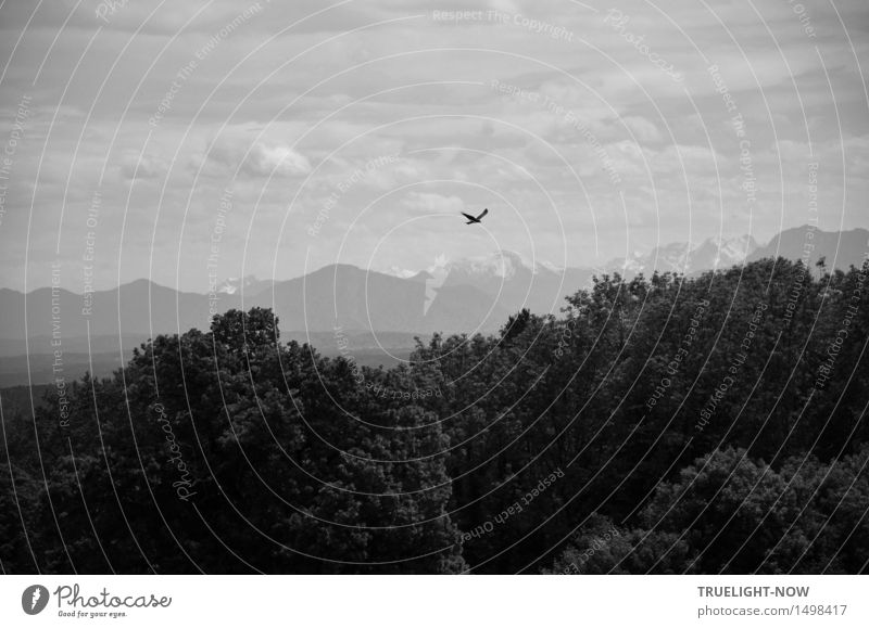 Homeland view with bird of prey - - - Harmonious Well-being Vacation & Travel Trip Far-off places Freedom Mountain Hiking Nature Landscape Plant Elements Earth