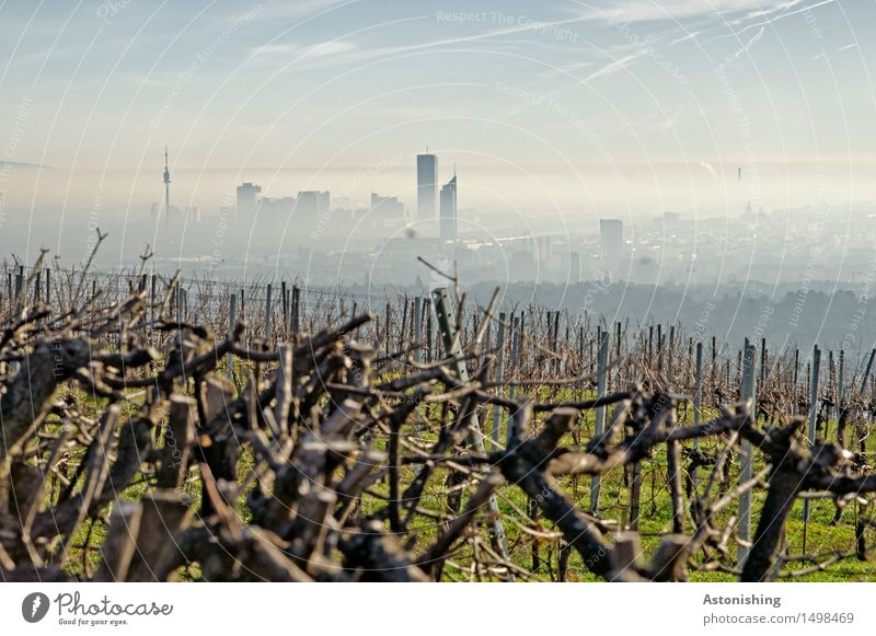 the city in the background Environment Nature Landscape Plant Air Sky Clouds Horizon Weather Fog Grass Bushes Hill Vienna Austria Town Capital city Downtown