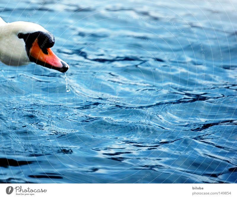 Water White Green Black Eyes Animal Freedom Lake Orange Bird Waves Feather Swimming & Bathing Long Square Deep