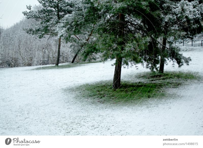 Green White Tree Landscape Winter Cold Meadow Snow Berlin Snowfall Park Copy Space Lawn Christmas tree Umbrellas & Shades Coniferous trees