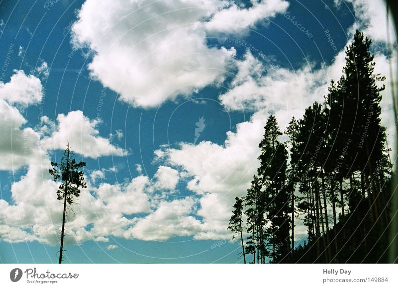 Sky White Tree Blue Black Clouds Loneliness Forest Dark Bright USA Branch Fir tree Americas Individual National Park