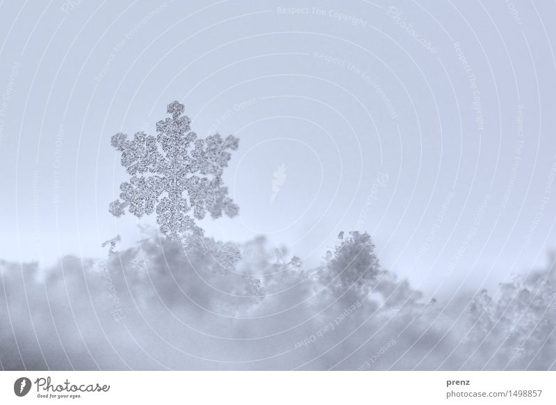 Nature Blue Winter Cold Environment Snow Gray Snowfall Weather Ice Climate Frost Snowflake Snow crystal