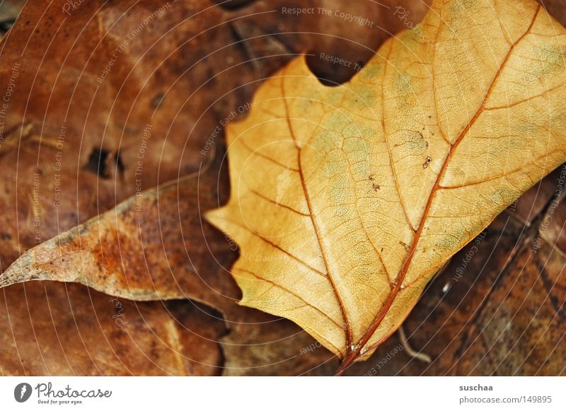 Winter Leaf Yellow Dark Cold Autumn Brown Sleep Transience Fatigue Seasons Freeze Vessel Shriveled Limp
