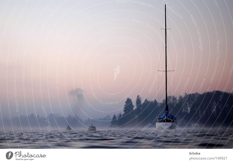 Sink ships! Watercraft Sailboat Liquid Lower Smoke Cold Deep Calm Lake Switzerland Waves Forest Fog Sky Moody Untouched Free Freedom Harmonious Winter Haze