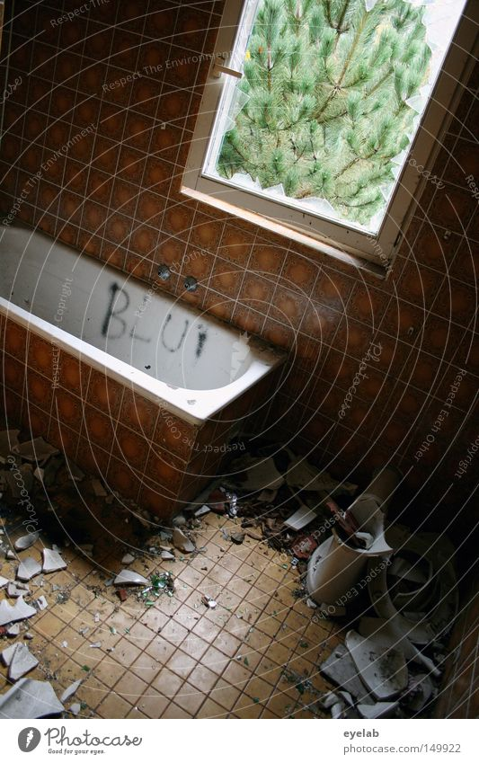 Old White Plant House (Residential Structure) Loneliness Window Garden Building Dirty Flat (apartment) Glass Wet Empty Bathroom Vantage point Broken
