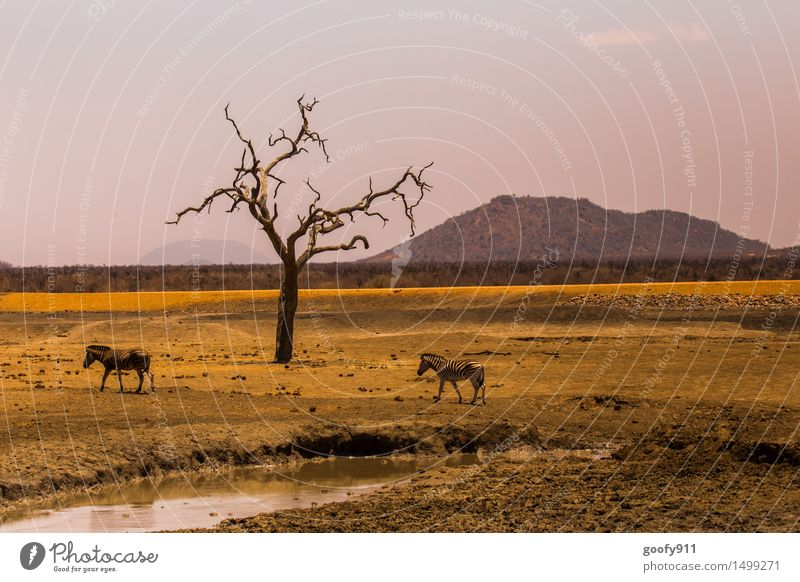 Africa Environment Nature Landscape Earth Sand Water Sunlight Spring Summer Beautiful weather Warmth Drought Tree Hill Desert Steppe Quagga Animal Wild animal