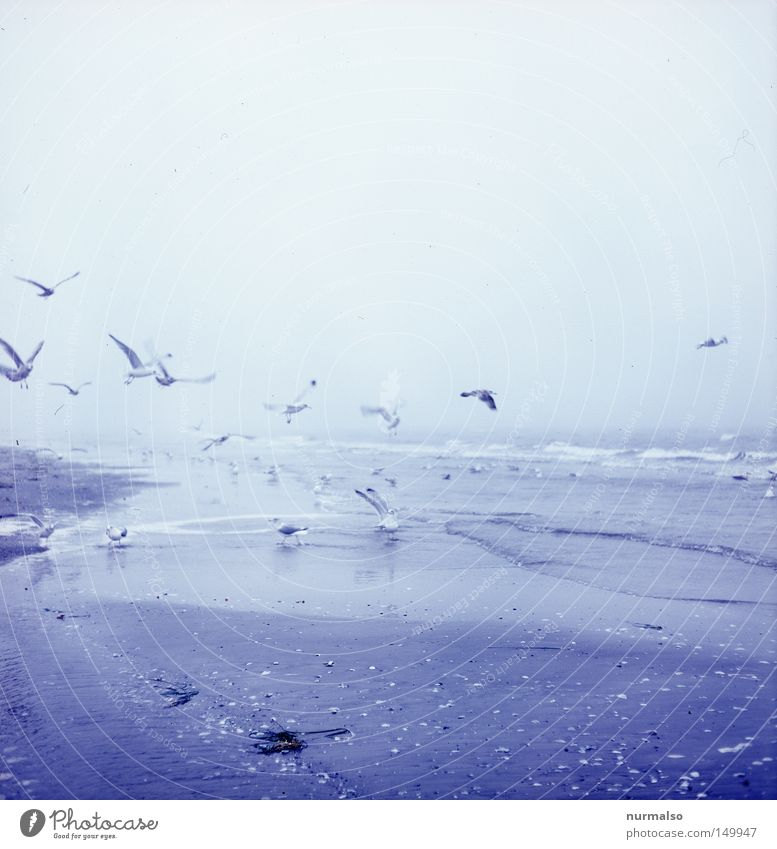 Sea gull's sky Beach Seagull Fog Baltic Sea Sky Winter North Nordic Fresh Ocean Sea water Sand To feed Flying Flock of birds To fall Crash Beak Wing Animal Bird