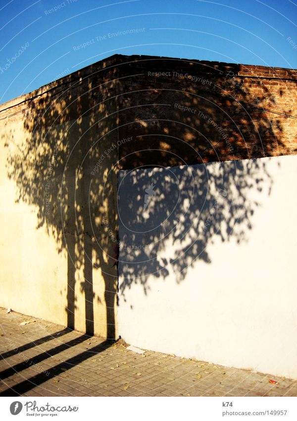 o.t. Tree Treetop Shadow Light Bright Sky Blue Wall (building) Wall (barrier) Tree trunk Corner Town Street Sidewalk Leaf Dappled Cut Partially visible