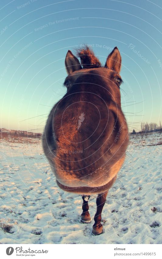 Sky Blue Joy Winter Snow Exceptional Brown Free Stand Happiness Communicate Observe Curiosity Near Horse Serene