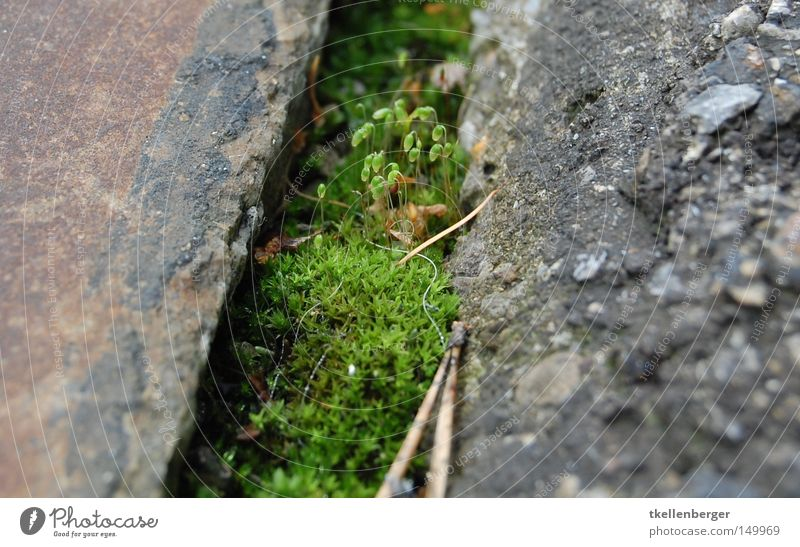 Nature Green Plant Red Leaf Black Street Mountain Gray Blossom Head Stone Small Earth Going Concrete
