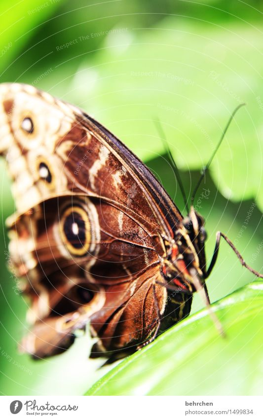 structure Nature Plant Animal Tree Leaf Garden Park Meadow Wild animal Butterfly Animal face Wing 1 Observe Relaxation Flying Exceptional Exotic Beautiful Brown