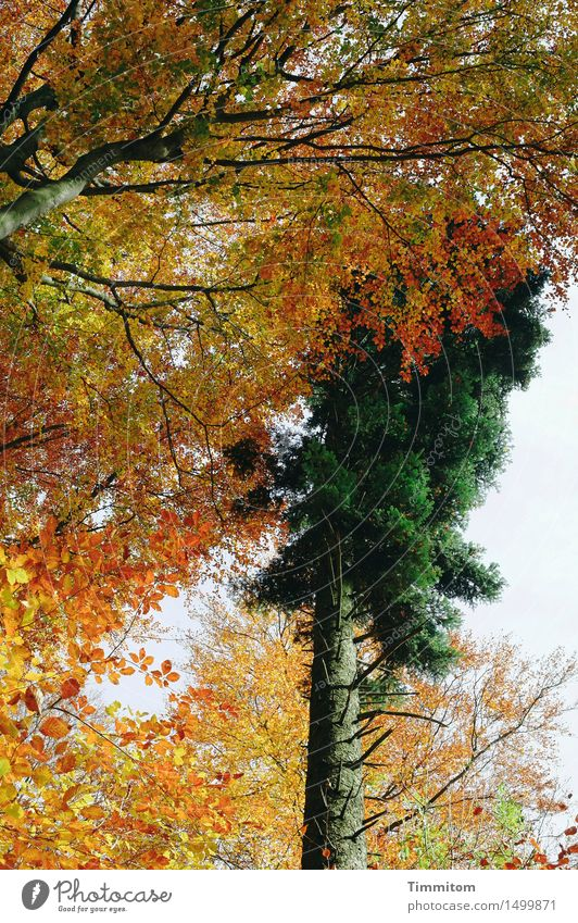 Nature Plant Green Tree Forest Yellow Autumn Orange Branch Bleak Autumnal colours Coniferous trees Deciduous tree