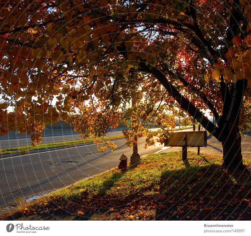 It's A Beautiful Day Tree Leaf Autumn Sun Warmth Morning Sunset Shadow Red Indian Summer To fall leaves