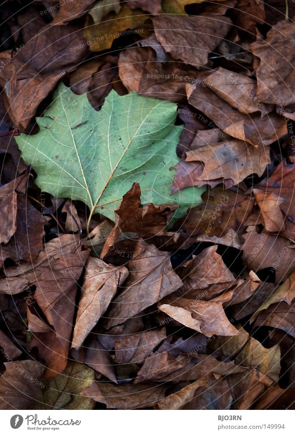 Plant Leaf Autumn Target Change To fall Transience Seasons Goodbye Botany Vessel Section of image Rachis Branched Autumnal Offense