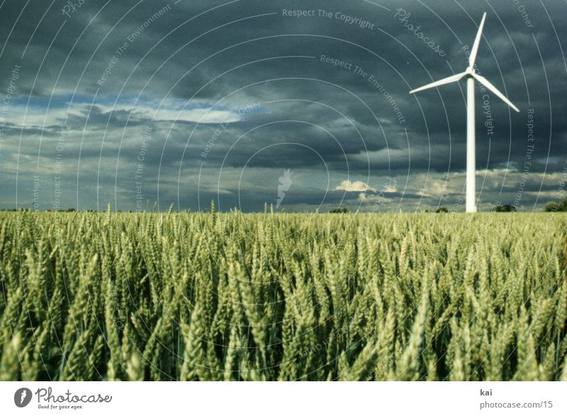 Nature Sky Clouds Far-off places Field Grain Wind energy plant Agriculture Ear of corn Grain field