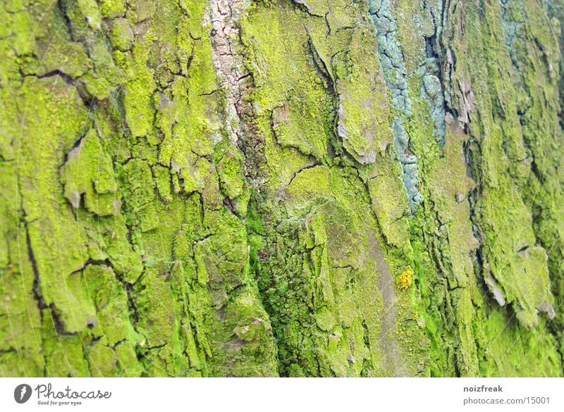 Nature Tree Green Weather Moss Tree bark