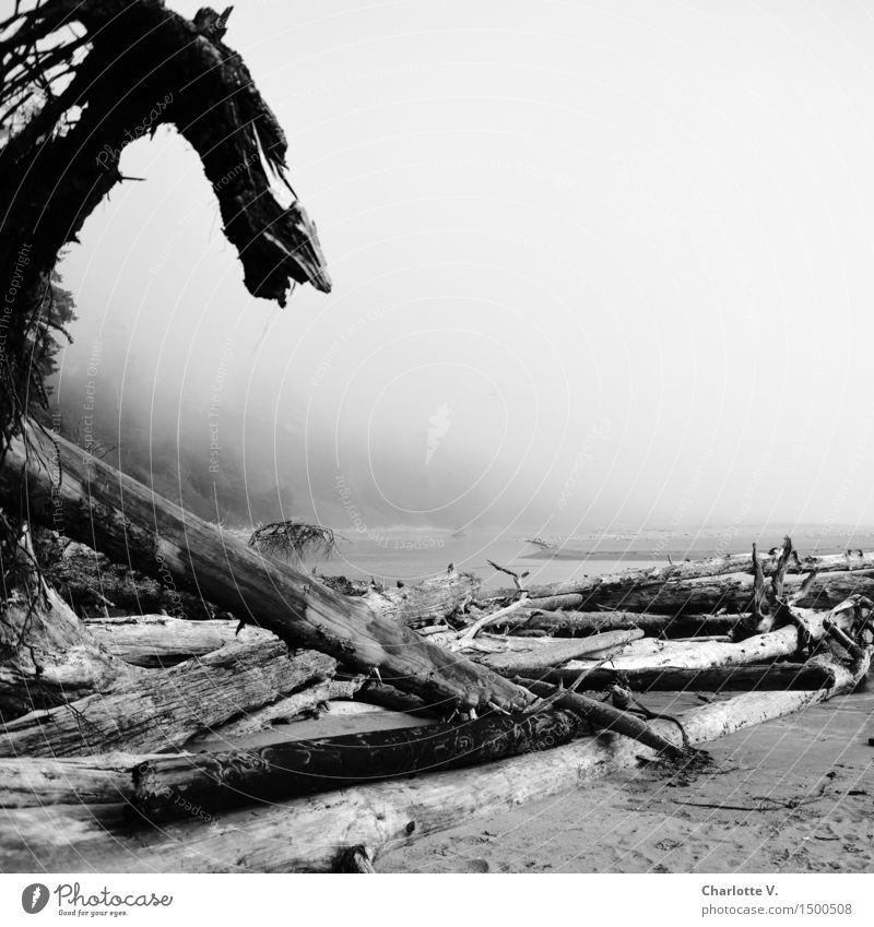 Nature Water White Ocean Loneliness Beach Dark Black Coast Wood Gray Sand Island Threat Elements Whimsical