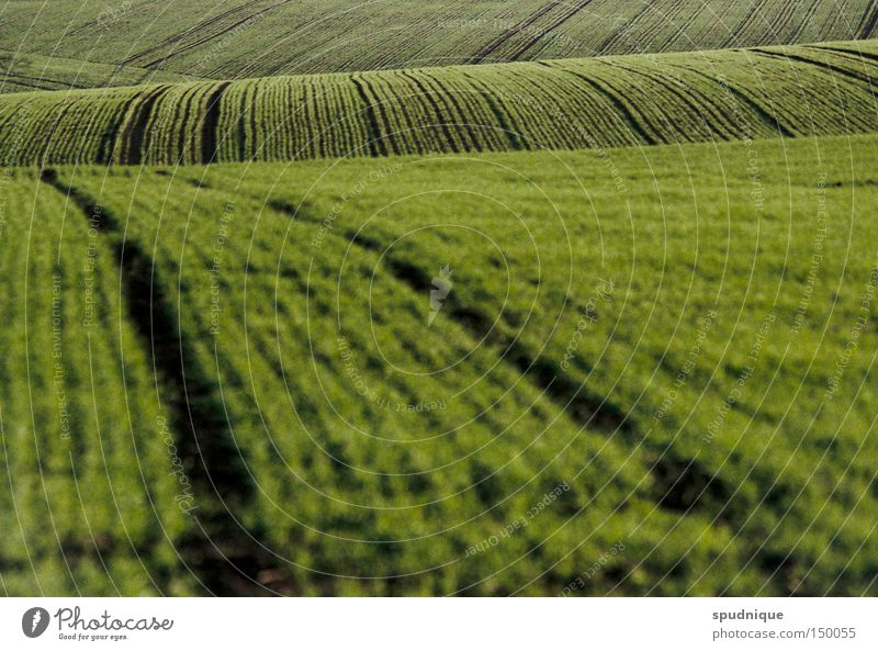 green waves Field Hill Meadow Sowing Grass Green Line Far-off places Country life Plow Blur Landscape Peace grass hub greenish Escape Americas country love