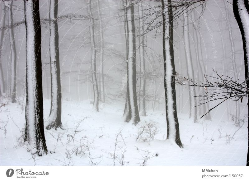 WinterDay Tree Forest Snow White Gray Fog Misted up Black To go for a walk Jinxed Enchanted forest Fairy tale Wood Wet Dark Ice Ice age Climate change