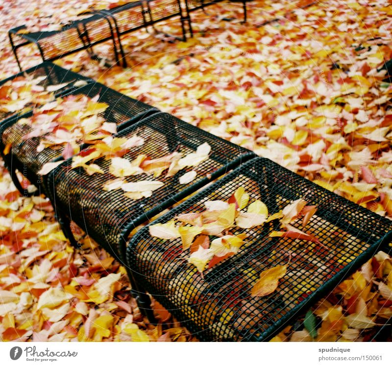 Before winter Autumn Leaf Autumnal Seasons Park bench To dry up Rustling Multicoloured Transience Garden End To fall Bench Relaxation Thin Colour