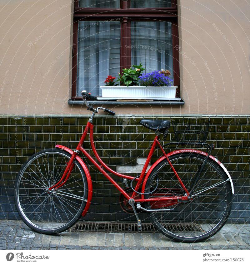 Flower Street Window Bicycle Transport Parking lot Parking Lean House wall Window box