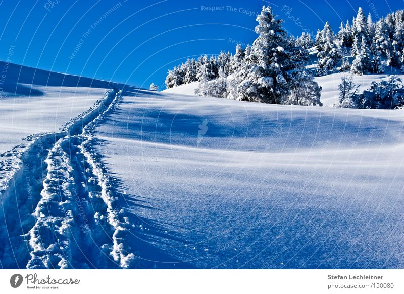 Winter Snow Mountain Forest Tracks Austria Snowscape Federal State of Tyrol Winter forest Deep snow Snow track