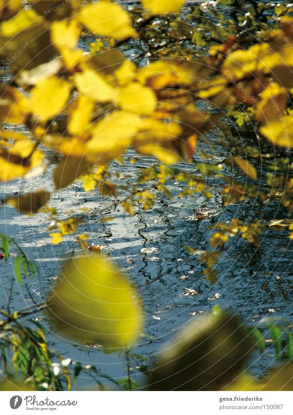 Nature Water Tree Leaf Autumn Movement Waves