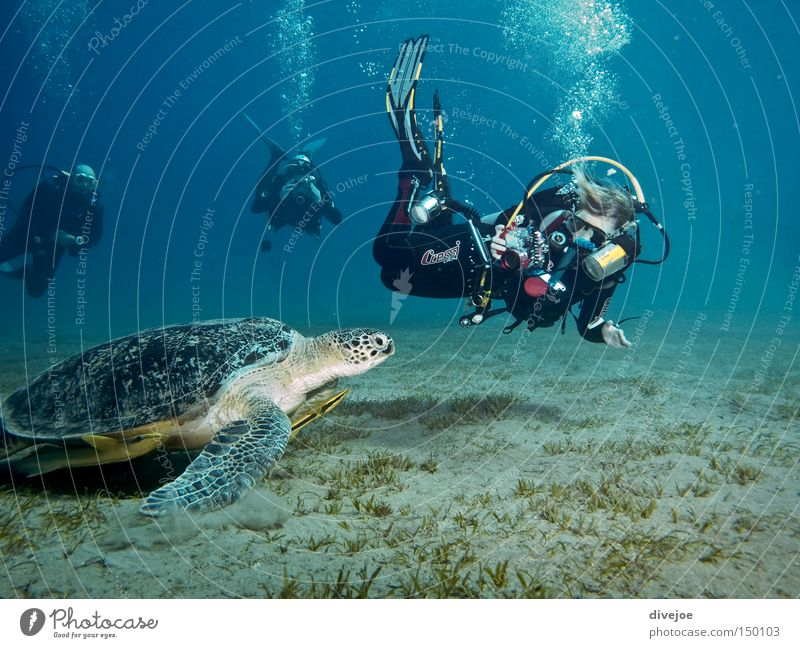 Turtle with divers Dive Diver Underwater photo Blue Turquoise Bubble Air bubble Sports Playing Water Ocean diving UW photography bubbles