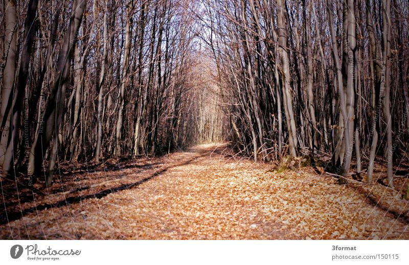 Winter Forest Autumn Lanes & trails Dream Fear Target Footpath Fairy tale Doomed Bleak Panic Badlands
